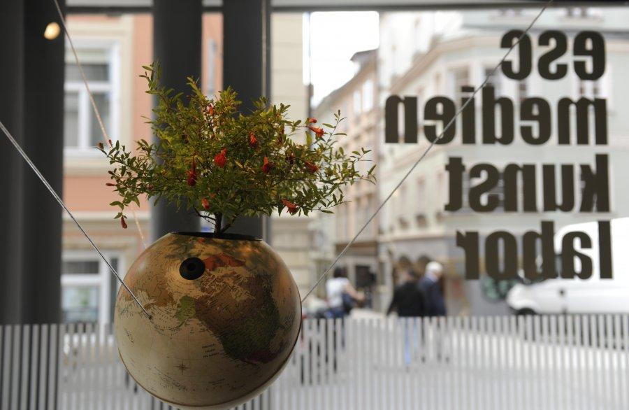 """Punica granatum"", Foto: Maryam Mohammadi, © esc medien kunst labor"