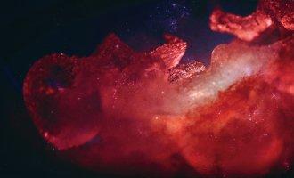 © Kathy Hinde & NASA. Flyersujet: .siacus)